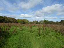 Two Pasture Fields & Wildlife Area in Quiet Location